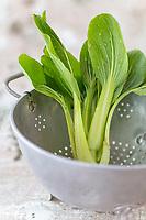 Gastronomie générale / Pak  Choï bio General gastronomy / Organic Pak Choï