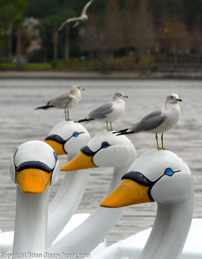 Three seagulls perch atop the heads of a group of wooden swans in Orlando , FL.  (Photo by Brian Cleary/www.bcpix.com)