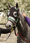 08 April 2010.  Champion Informed Decision in the paddock prior to her 3rd place finish in the Vinery Madison (GRI).