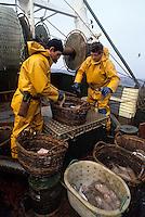 """Europe/France/Bretagne/29/Finistère/Le Guilvinec: Pêche en mer sur le chalutier """"Samouraï"""" - tri des poissons"""