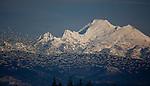 Snow geese, Mt. Baker, Skagit Valley, Washington