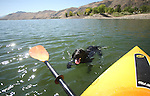 A labrador retriever pup swims in Topaz Lake at the Nevada/California border on Sept. 29, 2009..Photo by Cathleen Allison.
