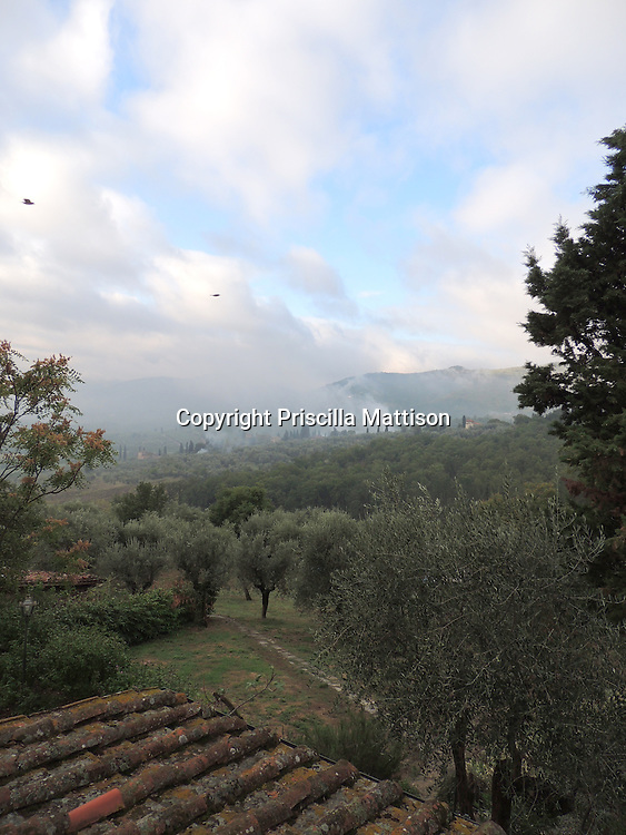 Birds fly through smoke in the Tuscan countryside.