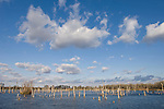 Brazoria County, Damon, Texas; afternoon sunlight  on a lake with blue skies and puffy white clouds overhead
