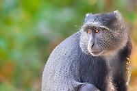 Lake Manyara National Park wildlife, in Tanzania, Africa