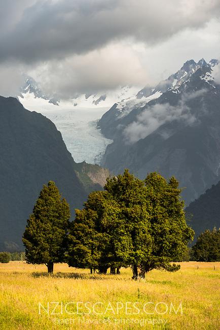 Farmland with Fox Glacier in background, Westland Tai Poutini National Park, West Coast, South Westland, UNESCO World Heritage Area, New Zealand, NZ