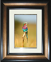 """Image Size:  10"""" x 15""""<br /> Finished Frame Dimensions:   23"""" x 28""""<br /> Quantity Available: 1"""