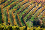 Italien, Piemont, Region Monferrato: Weingut bei Serralunga di Crea (Detail) | Italy, Piedmont, Region Monferrato: wine growing estate near Serralunga di Crea (detail)