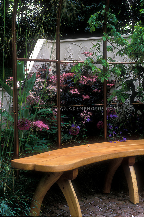 Wooden garden bench with iron trellis, Sambucus nigra Black Beauty in bloom, ornamental grasses, against white wall 12075