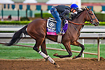 October 26, 2014:  Flying Tipat exercises in preparation for the Breeders' Cup Juvenile Fillies Turf at Santa Anita Race Course in Arcadia, California on October 26, 2014.John Voorhees/ESW/CSM