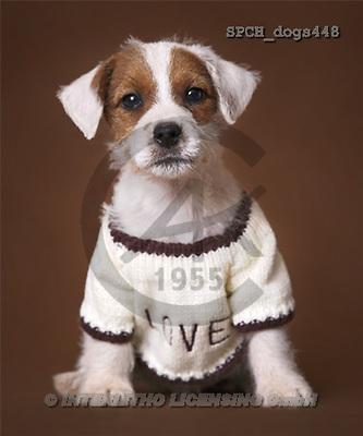 Xavier, ANIMALS, dogs, photos(SPCHdogs448,#A#) Hunde, perros
