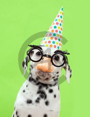 Xavier, ANIMALS, REALISTISCHE TIERE, ANIMALES REALISTICOS, dogs, photos+++++,SPCHDOGS908,#a#, EVERYDAY