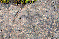Petroglyph at the Pu'u Loa Petroglyph Field in Hawai'i Volcanoes National Park, Big Island.