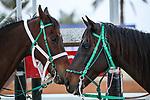 RIYADH, SA February 19: Track work from King Abddulaziz Racetrack, Riyadh, Saudi Arabia. Shamela Hanley/Eclipse Sportswire/CSM