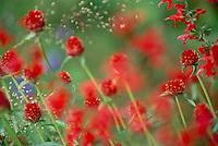 Strawberry wildflowers