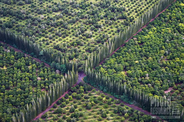 An aerial view of an intersection in the middle of the Mauna Loa Macadamia Nut Farm, Big Island.