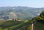 Italien, Piemont, Langhe: Weinberge bei Serralunga | Italy, Piedmont, Langhe: vineyards near Serralunga