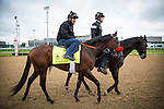 LOUISVILLE, KY - MAY 05: Nyqvist, with exercise rider Jonny Garcia is lead to the track by assistant trainer Jack Sisterson at Churchill Downs on May 05, 2016 in Louisville, Kentucky.(Photo by Alex Evers/Eclipse Sportswire/Getty Images)