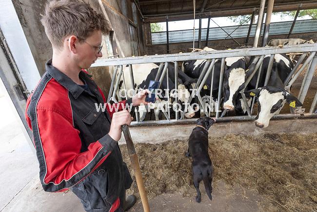 Woudenberg, 070721<br /> Veehouder Stef van Barneveld bi koeien.<br /> Foto: Sjef Prins - APA Foto