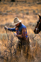 Cowboy tying up horse to sagebrush