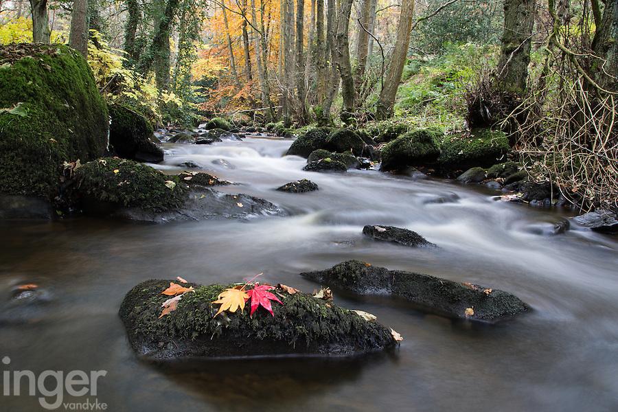 Autumn Leaves at Goit Stock falls, Yorkshire, United Kingdom
