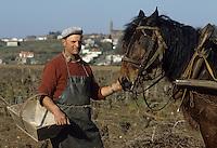 Europe/France/Pays de la Loire/44/Loire-Atlantique : Château-Thebaud : Vignoble AOC Muscadet du Sèvre et Maine - Attelage dans les vignes<br /> PHOTO D'ARCHIVES // ARCHIVAL IMAGES<br /> FRANCE 1990
