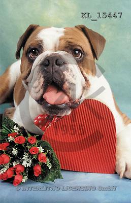 Interlitho, Alberto, ANIMALS, dogs, photos, dog, heart, roses(KL15447,#A#) Hunde, perros