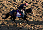 October 31, 2019: Breeders' Cup Juvenile Turf Sprint entrant King Neptune, trained by Aidan P. O'Brien, exercises in preparation for the Breeders' Cup World Championships at Santa Anita Park in Arcadia, California on October 31, 2019. John Voorhees/Eclipse Sportswire/Breeders' Cup/CSM