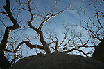 Boab Tree, Kimberley region, Western Australia