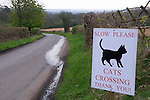 Slow Please Cats Crossing. Britain a nation of animal lovers. Coldharbour Surrey Uk. Surrey Hills. Drive slowly cats crossing.