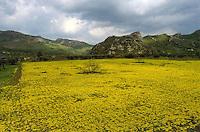 - Italy, Sicily, the countryside between Caltagirone and Agrigento<br /> <br /> - Italia, Sicilia,  la campagna fra Caltagirone e Agrigento