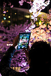 A man takes pictures of the cherry blossoms in full bloom at Roppongi Midtown on April 1, 2016, Tokyo, Japan. On Thursday, the Japan Meteorological Agency announced that Tokyo's cherry trees were in full bloom, three days earlier than usual, but two days later than last year. The spot starts at the pedestrian bridge in Midtown Tower towards to the Hinokicho Park in Roppongi. (Photo by Rodrigo Reyes Marin/AFLO)