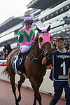 SHA TIN,HONG KONG-DECEMBER 11: Aerovelocity,ridden by Zac Purton,after winning the Hong Kong Sprint at Sha Tin Racecourse on December 11,2016 in Sha Tin,New Territories,Hong Kong (Photo by Kaz Ishida/Eclipse Sportswire/Getty Images)