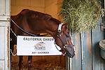 October 27, 2014: California Chrome at Santa Anita Park in Arcadia, California on October 27, 2014. Zoe Metz/ESW/CSM