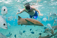 snorkeler with nurse shark, Ginglymostoma cirratum, and crevalle jacks, Caranx hippos, Shark Ray Alley, Ambergris Caye, Belize, Central America (Caribbean) (do)