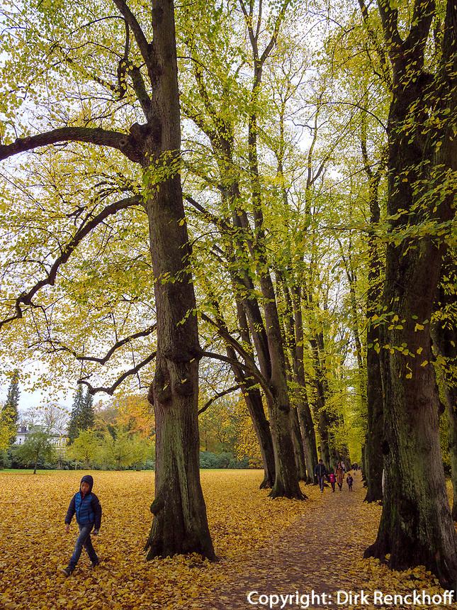Altweibersommer, Lindenalle im Hirschpark in Hamburg-Blankenese, Deutschland, Europa<br /> Indian Summer, Limetree alley in Hirschpark in Hamburg-Blankenese, Germany, Europe