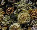 "London, UK. 05.06.2020. ""Liminal""  (Dead flowers floating in water).  Photograph © Jane Hobson."