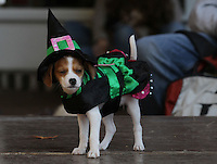 Brenna Williams', 13, dog Biggie Williams takes the stage dressed as a witch for the costume contest in the 4th Annual Doggie Howl-O-Ween event on the Downtown Mall Sunday afternoon.