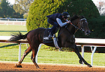 October 16, 2015:  Ralis works for trainer Doug O'Neill in preparation for the Breeder's Cup Juvenile.   Candice Chavez/ESW/CSM