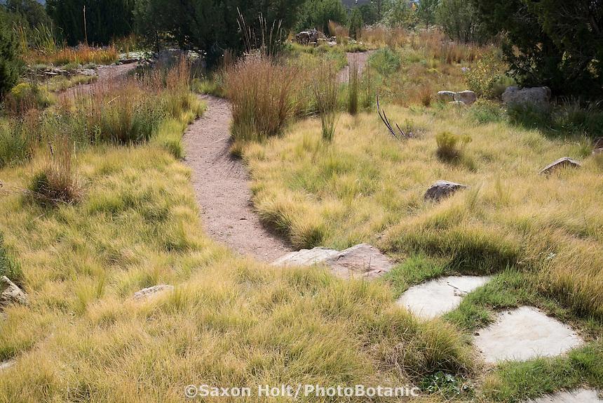 Stepping stone path through Buffalo grass (Buchloe dactyloides) lawn in New Mexico meadow garden