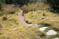 Stepping stone path through Buffalo grass (Buchloe dactyloides) lawn in New Mexico meadow garden