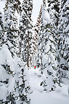 Cross Country skiing on the trails at Chief Joseph Pass with snow hanging from the trees