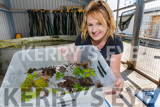 Louise Overy from Dingle Ocean World with the natterjack toads nursery.