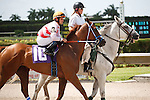 Silver Cloud on post parade for the running of the Bob Umphrey Turf Sprint Stakes, Calder Race Course, Miami Gardens Florida. 07-07-2012.  Arron Haggart/Eclipse Sportswire.