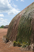 Xingu Indigenous Park, Mato Grosso State, Brazil. Aldeia Lahatua (Kuikuro). New oca house showing newly-thatched section with sapé thatch still green.
