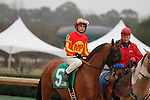 #5 Hoppertunity with jockey Mike Smith aboard during posst parade of the Rebel Stakes (Grade II) at Oaklawn Park in Hot Springs, Arkansas-USA on March 15, 2014. (Credit Image: © Justin Manning/Eclipse/ZUMAPRESS.com)