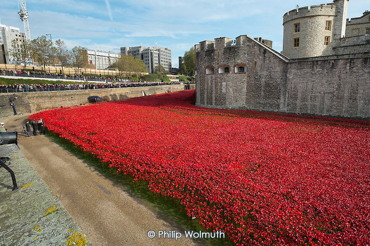 Art installation of ceramic poppies by Paul Cummins commemorating British and colonial soldiers who died in WW1. Crowds mark Armistice Day at the Tower of London 100 years after the start of the First World War.