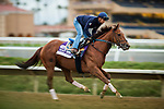 DEL MAR, CA - NOVEMBER 01:  Accelerate, owned by Hronis Racing LLC and trained by John W. Sadler, exercises in preparation for the Breeders' Cup Las Vegas Dirt Mile at Del Mar Thoroughbred Club on November 01, 2017 in Del Mar, California. (Photo by Alex Evers/Eclipse Sportswire/Breeders Cup)