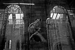 """""""Apparition""""<br /> Lemur Display<br /> London Museum of Natural History<br /> United Kingdom<br /> From the """"Captivity"""" series<br /> © Thierry Gourjon-Bieltvedt"""