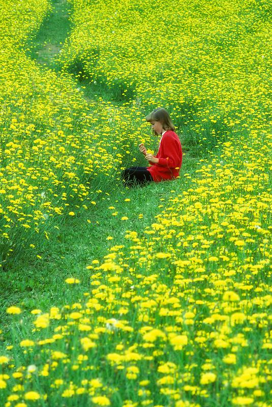 Child in field with dandelions.  Near Monroe, Oregon.